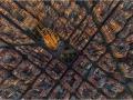 Cells of Barcelona