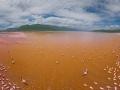 Kenya, Flamingo, Lake Bogoria