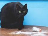 """FOTO: """"Sujevjerje"""" crne mačke"""