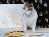 ZANIMLJIVOST: Mačka Van Gog pokazala slikarsko umijeće