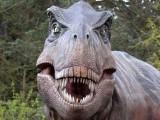 """ART: Dinosaourusi ,,dolaze"""" u Budvu"""