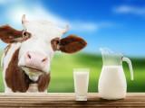 STATISTIKA: Mljekare i sirare u februaru otkupile 1,7 miliona litara mlijeka