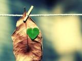 POUČNA PRIČA: Šta čuju vaše srce i um