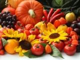 PODGORICA: Promocija i prodaja organske hrane u četvrtak u hotelu ,,Terminus″