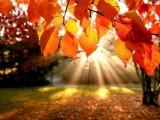 GODIŠNJA DOBA: Počela jesen