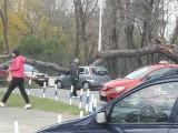 PODGORICA: Jak vjetar oborio drvo na automobil kod KBC-a
