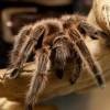NJEMAČKA: Na aerodromu u Dizeldorfu pronađen kofer pun tarantula