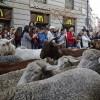 ŠPANIJA: 1.500 ovaca blokiralo centar Madrida