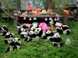 VIDEO: Najslađa žurka na svijetu u Nacionalnom rezervatu u Kini