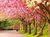 GODIŠNJA DOBA: Počelo proljeće