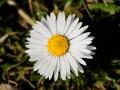 ZANIMLJIVOSTI: Bijela rada – cvijet koji simbolizuje čednost i odanost